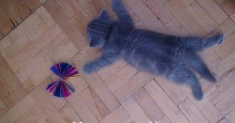 Прикольные картинки про котят (72 фото)