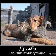 Прикольные картинки про дружбу (46 фото)
