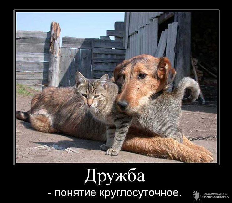 Прикольные фото и картинки о дружбе