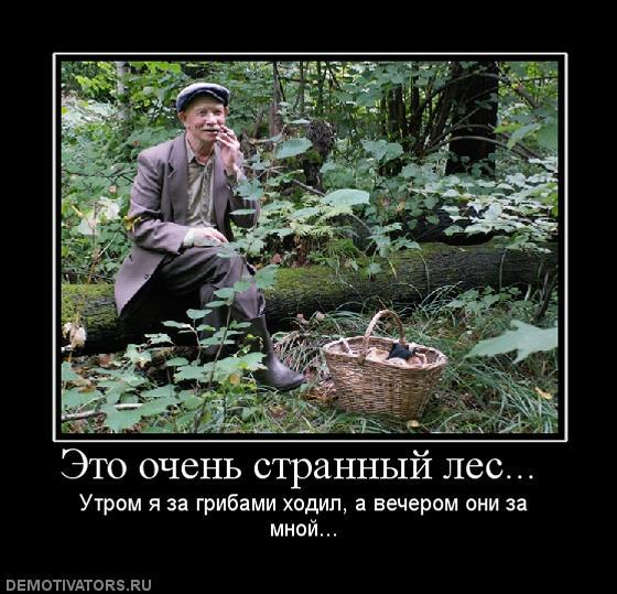 1258455171_81831_eto-ochen-strannyij-les-