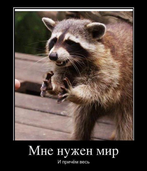 1341598378_demotivatori_pro_givotnih_725_99-9