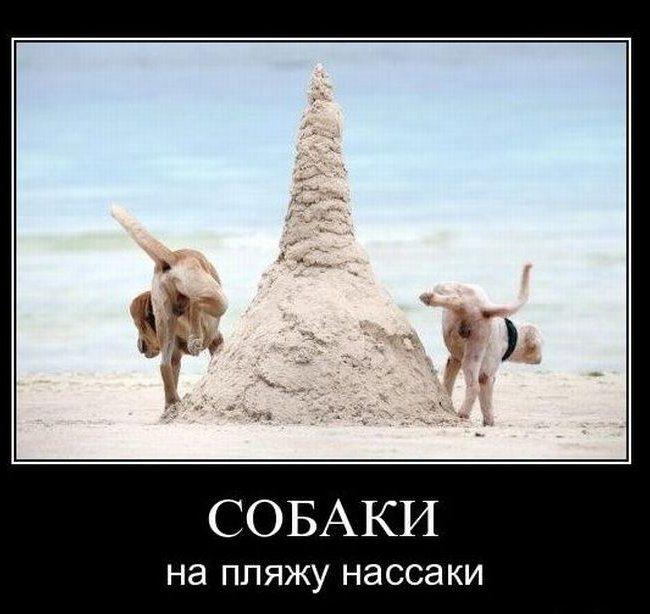 1342812741_veselie_demotivatori_s_givotnimi_415_67-14