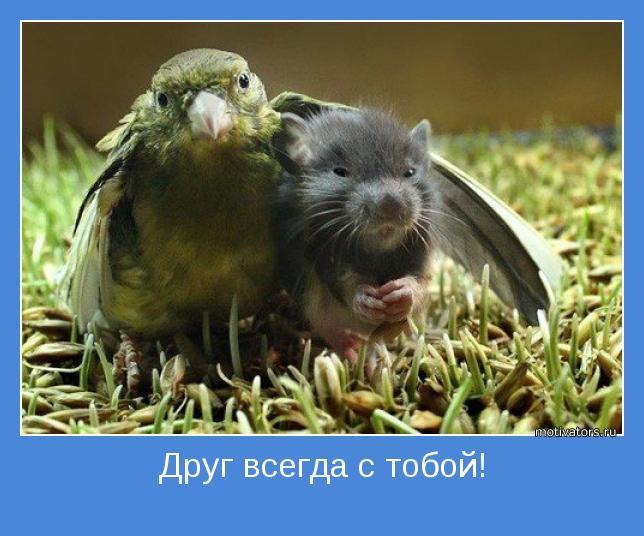 1343806316_motivatori_o_drugbe_56_79-9