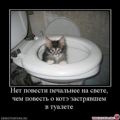 1364296677_323719_net-povesti-pechalnee-na-svete-chem-povest-o-kote-zastryavshem-v-tualete