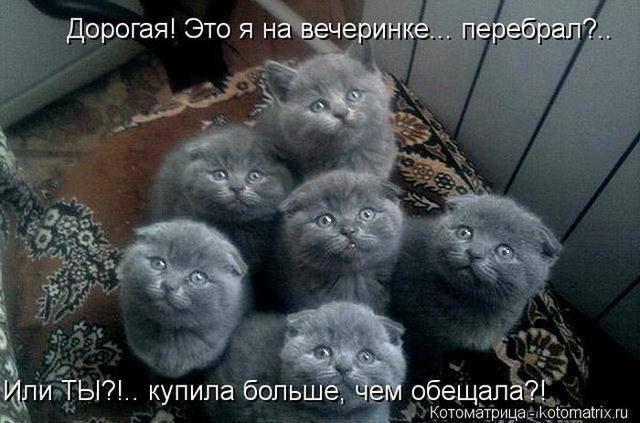 1381078264_prikoly-pro-zhivotnyh-6