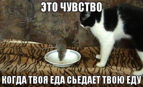 1387193857_prikolnye-kotiki-4