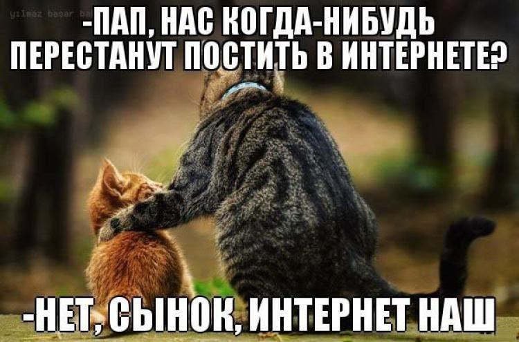 1387193959_prikolnye-kotiki-17
