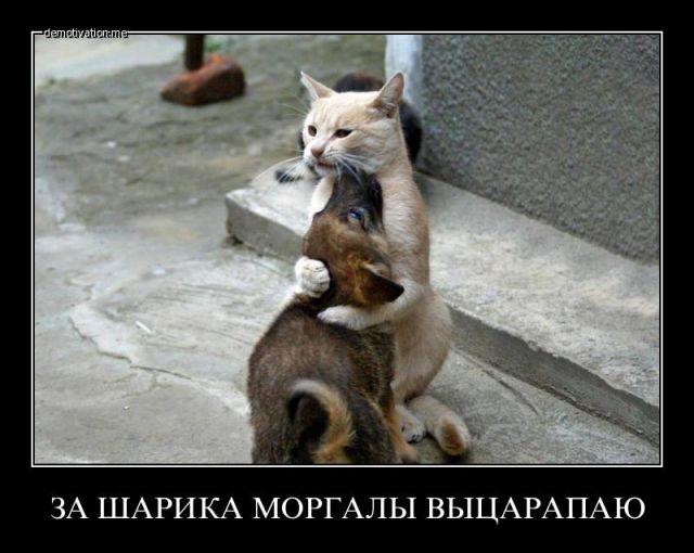 1389486779_prikolnie_demotivatori_o_jovotnih-93
