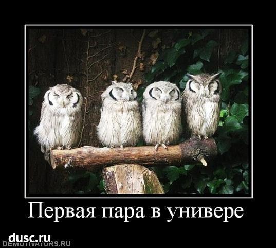 1422183712_demotivatory-1
