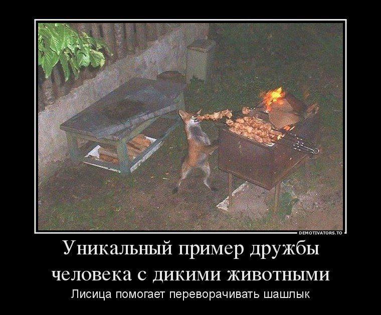 1434006174_demotivatory-shashlyki-15