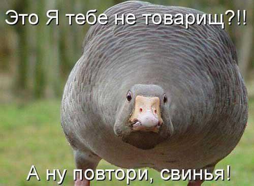 1434606439_rja4nie_kartinki_jivotnih18