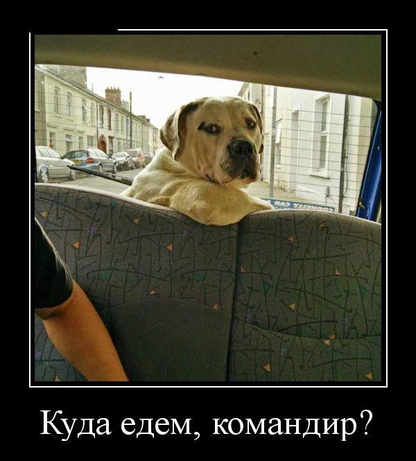 1448050106_svezhie-demotivatory-pro-zhizn_xaxa-net-ru-25