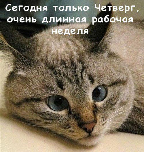 1_92637044_1350141541_chetverg