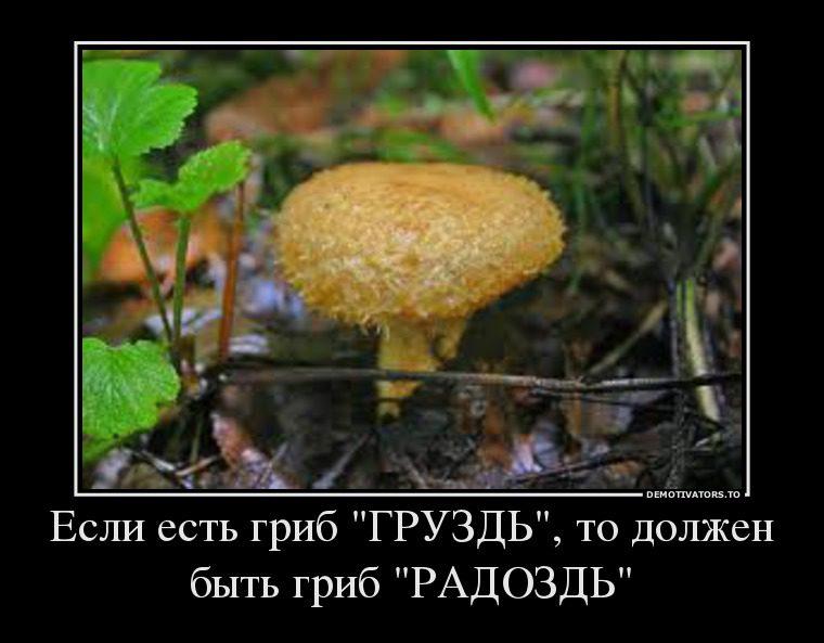 3962328_esli-est-grib-gruzd-to-dolzhen-byit-grib-radozd