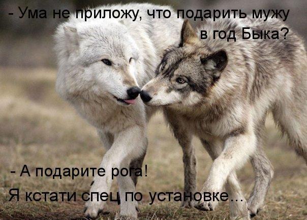 81425765_prikolnyekotyisobaki78