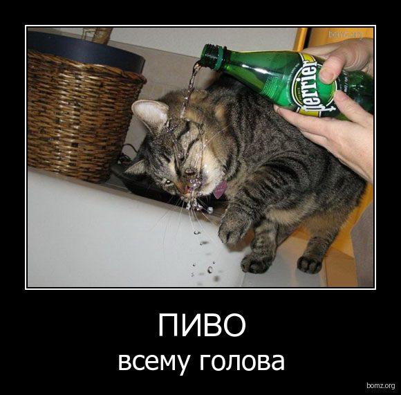 849309-2010-10-31-09-08-23-bomz-org-demotivator_pivo_vsemu_golova