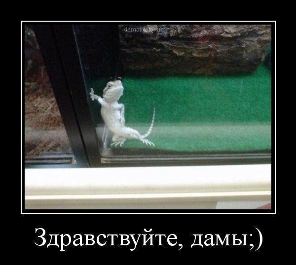 IMG_2752