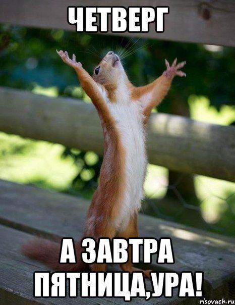 belka_60203045_orig_