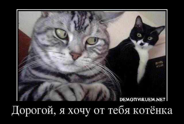 demotivator_541