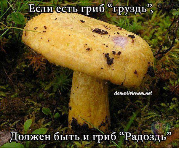 demotivator_soc_525