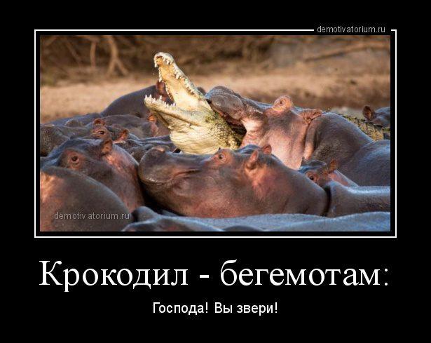 demotivatorium_ru_krokodil__begemotam_95048