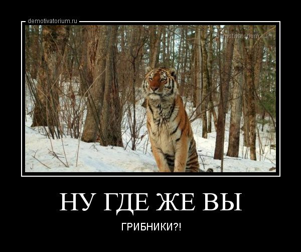 demotivatorium_ru_nu_gde_je_vi_43975