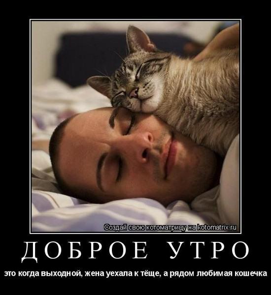 dlyakota.ru_kotiotkotomatrici_1321900942121