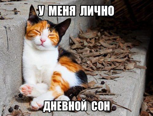 dnevnoi-son