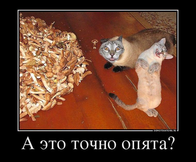 f8ebafa9c3f46bb9d534540a264