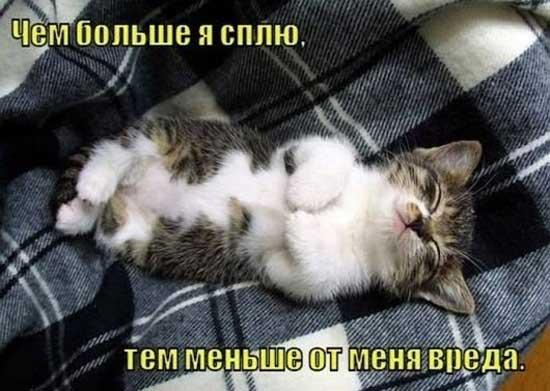 foto_pro_kotyat_03