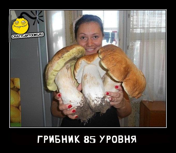 gribnik-85-urovnya