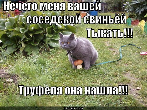 gribnik_1351657778