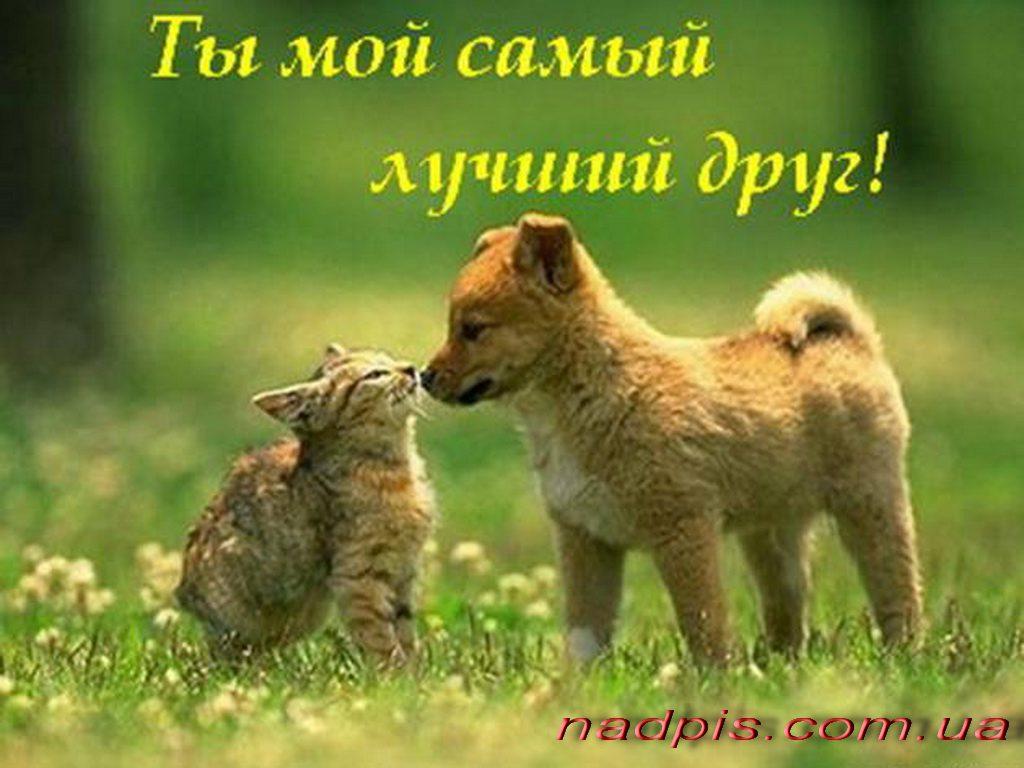 httpnadpis-com_-uaty-moj-samyj-luchshij-drug