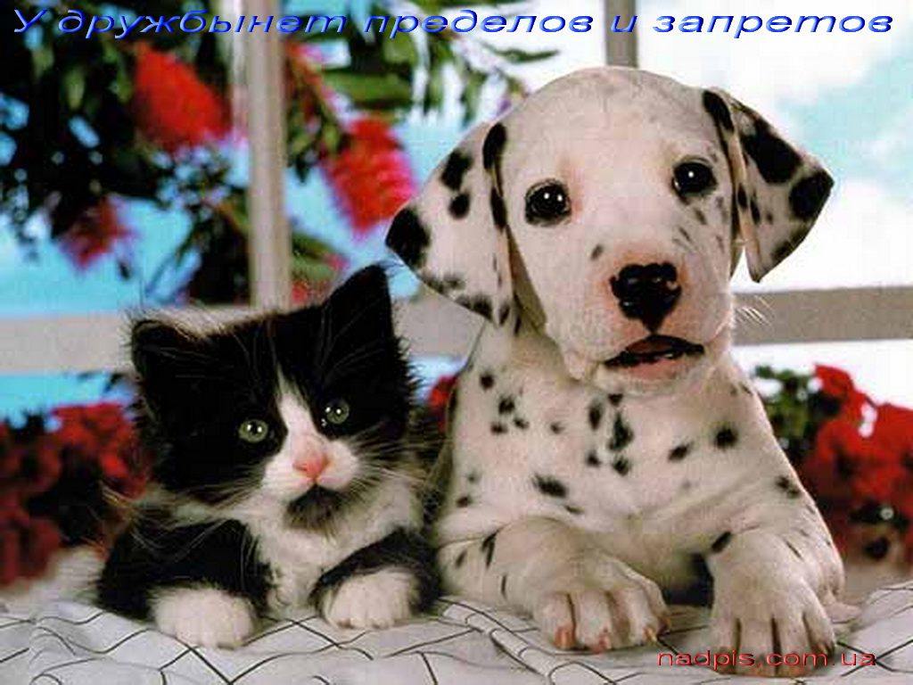 httpnadpis-com_-uau-druzhby-net-zapretov