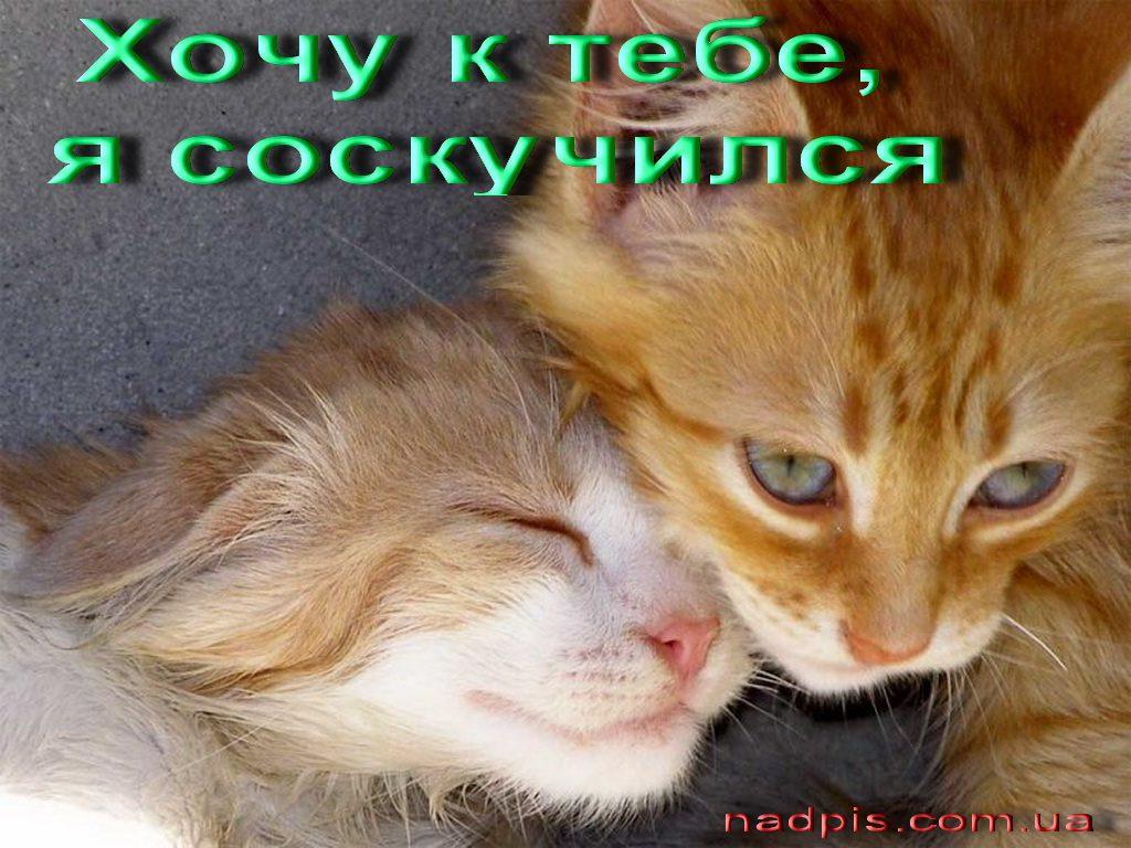 httpnadpis.com_.uaxochu-k-tebe-ya-soskuchilas