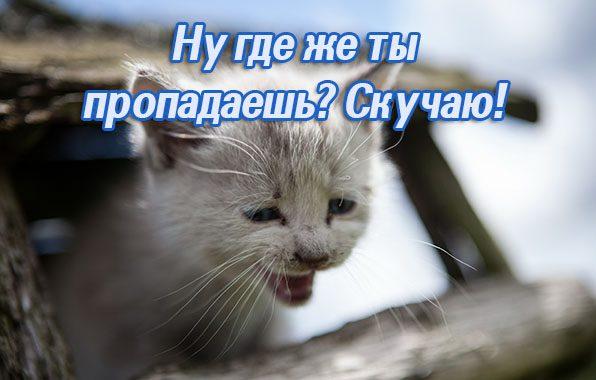котёнок, кошка, фон