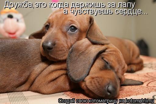 img_4987759_3115_0