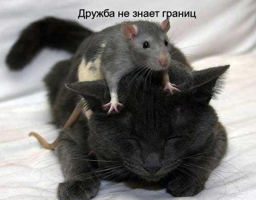 kartink_pro_druzhbu_03