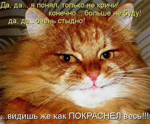 Смешные поздравления с котами фото 822
