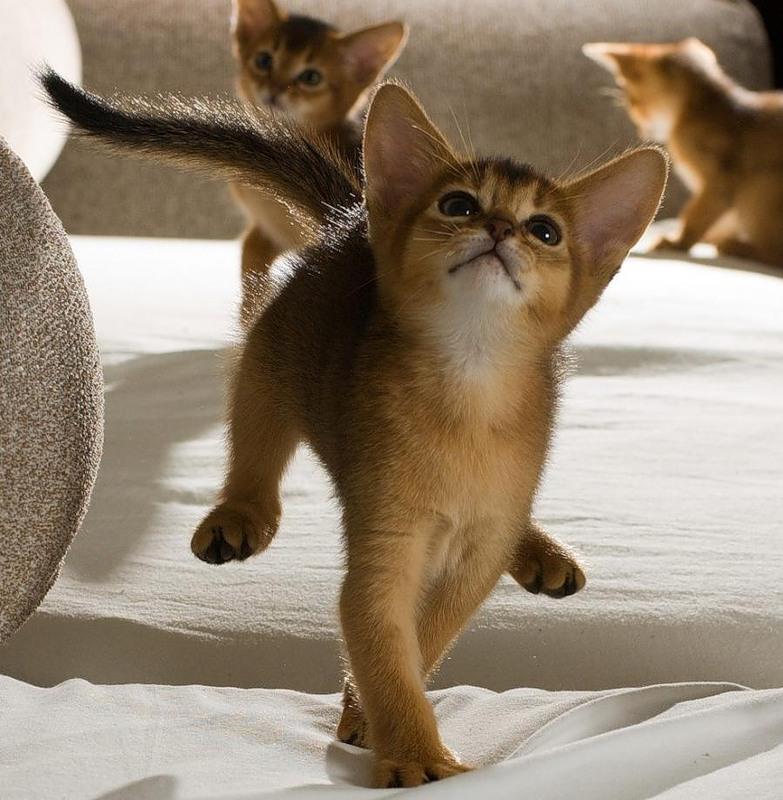 сапог, смешные картинки котов и котенка поздравления