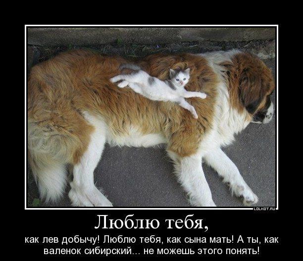 lyublyu-tebya_1326286373