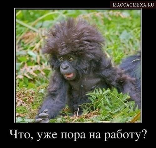 maccacmexa-prikolnaya-podborka-demotivatorov-s-zhivotnymi-2-1