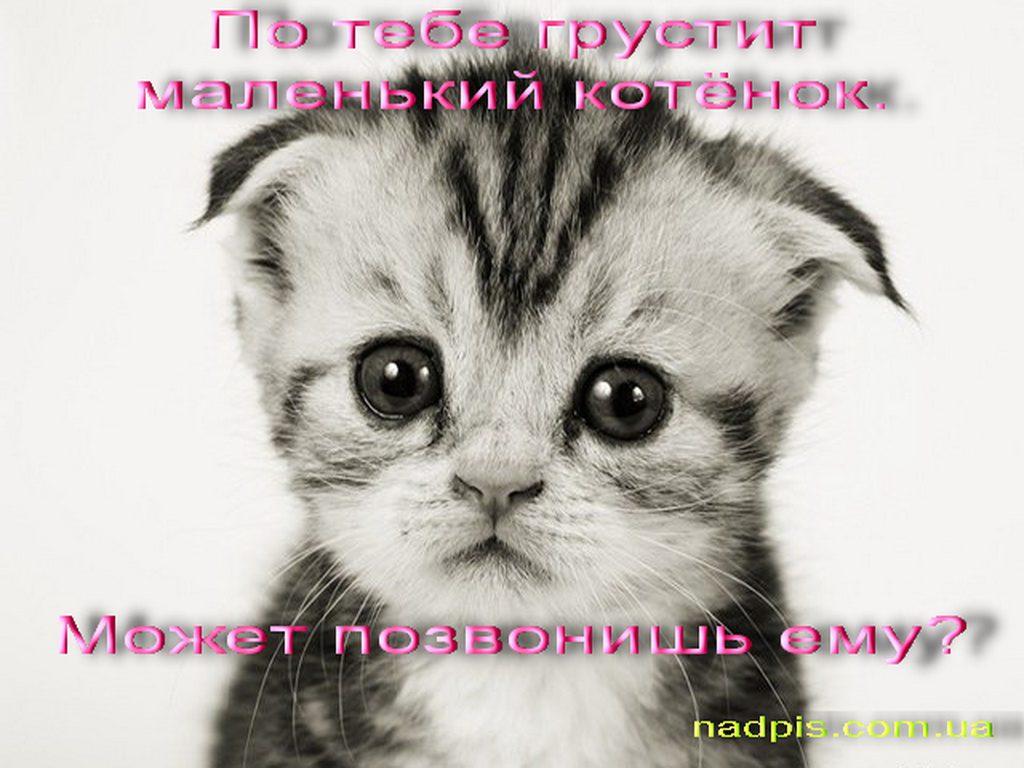 nadpis.com_.uapo-tebe-grustit-kotyonok