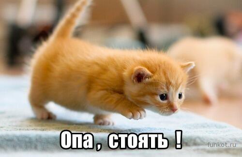 opa-stoyat-kitten
