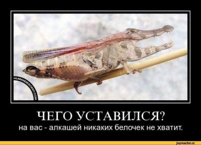 песочница-белочка-смешные-демотиваторы-алкаши-93121