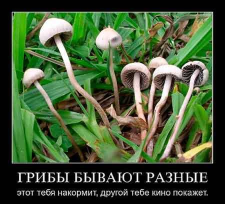 prikolnye-sovety-gribnikam2