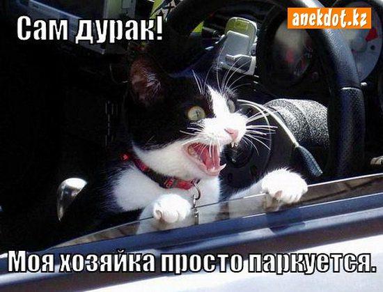 sam-durak-moya-hozyayka-prosto-parkuetsya