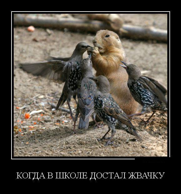 smeshnie_kartinki_140697325858
