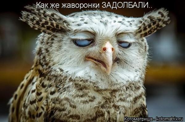 smeshnie_kartinki_144731465595