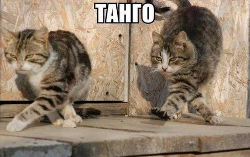 tango-vdvoem-list